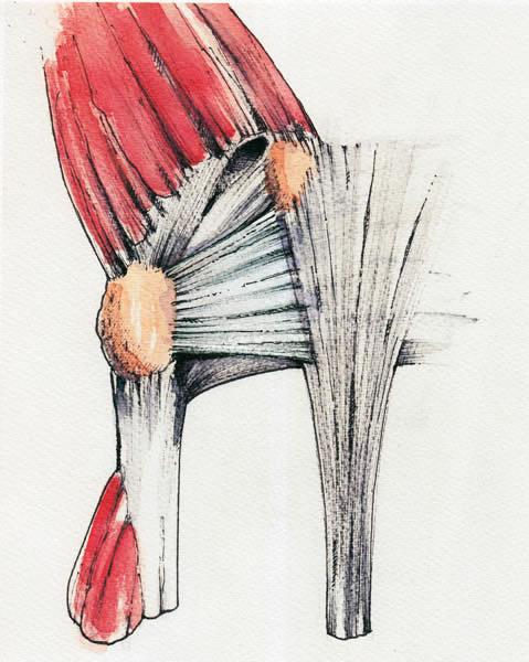 Anatomy Mr Donald Sammut Frcs Frcs Plast