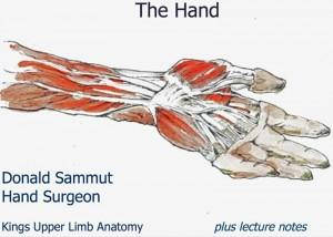 Kings Hand