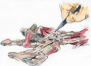 Anatomy Course